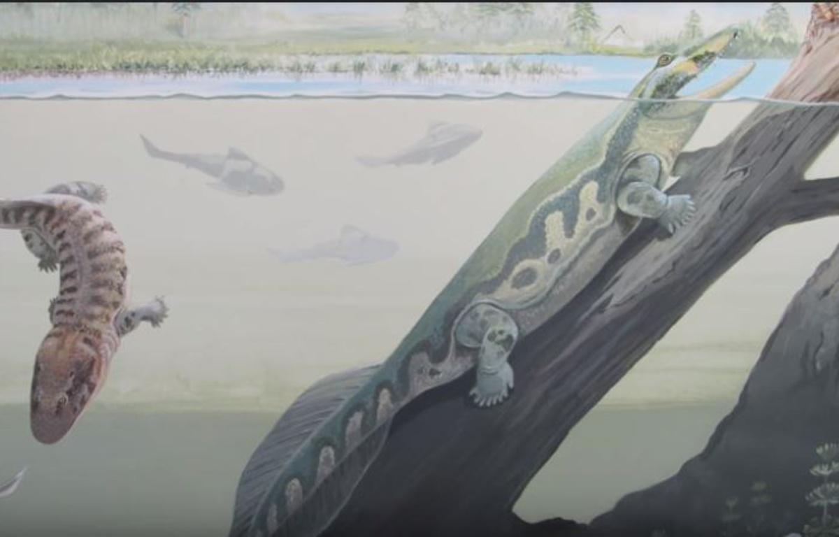 Afrique du Sud: La découverte de fossiles de tétrapodes remet en cause la théorie des tropiques