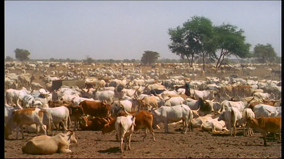 Sédhiou : Des éleveurs sensibilisés aux conséquences du vol de bétail