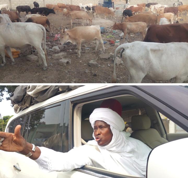 Tabaski 2020: Cheikha Astou Ndiaye envoie 110 bœufs et 200 moutons chez Chérif Maleyni