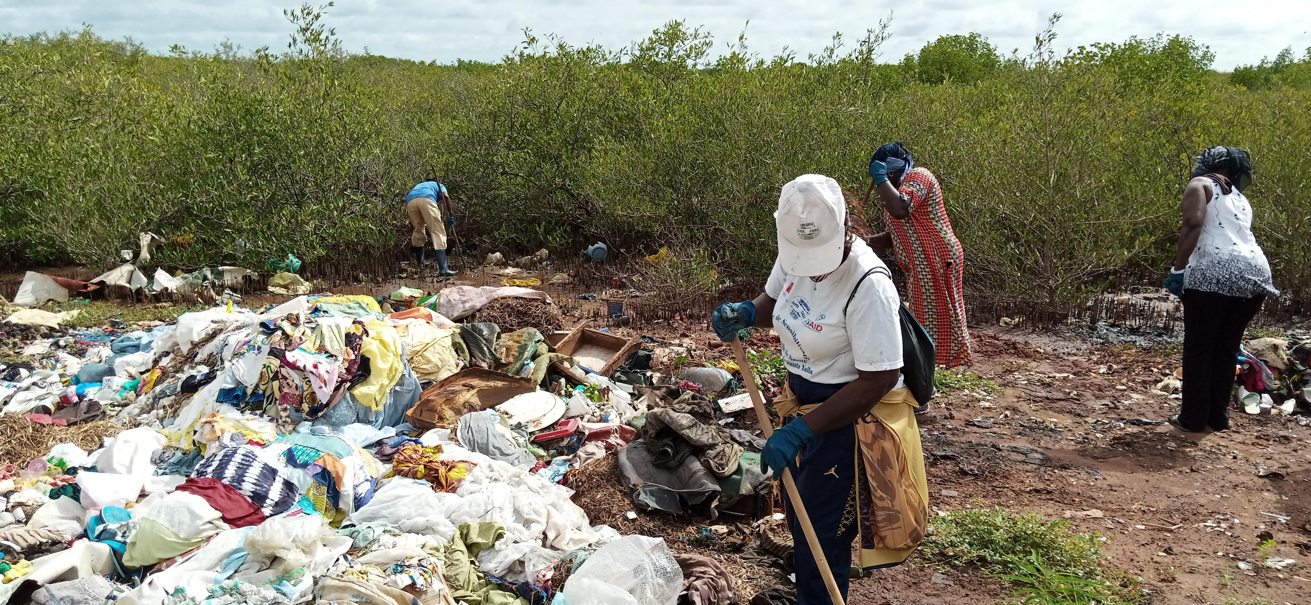 Bignona: La journée internationale de la mangrove célébrée autrement