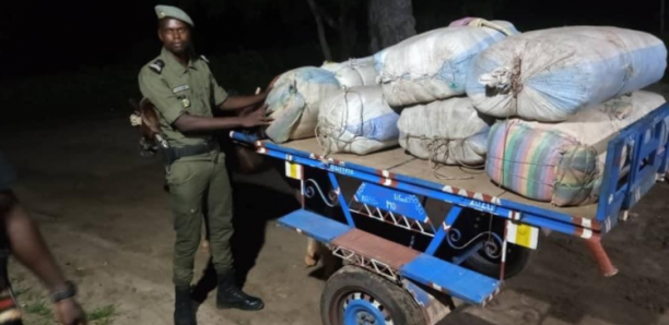 Fatick : 456 kg de chanvre indien saisis en 24 heures