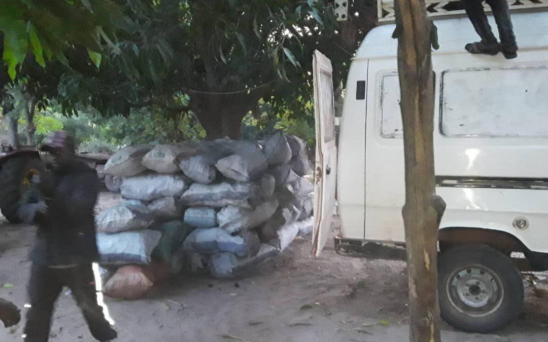 Bignona: Du bois et du charbon saisis entre Kabékel et Niankite, les trafiquants interpellés