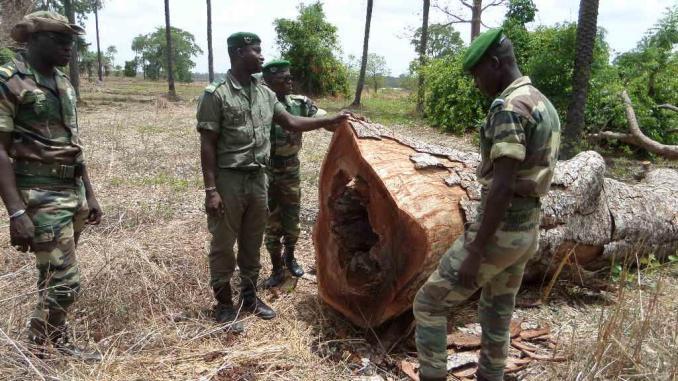 BIGNONA : Des hommes armés ouvrent le feu sur des agents des eaux et forêts et tue un….