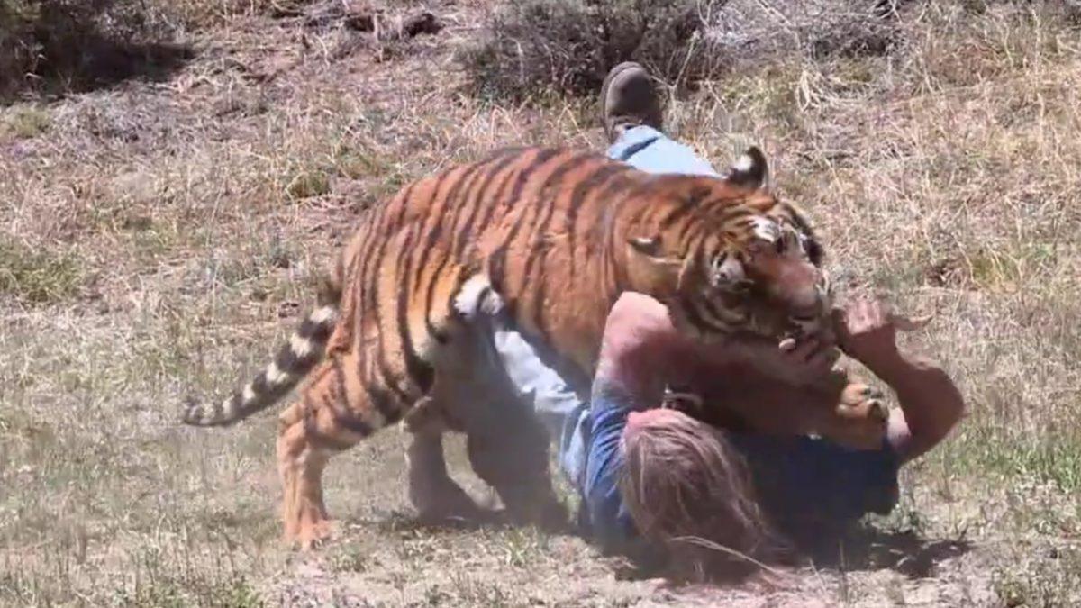 Drame en Chine: Un gardien de zoo tué par deux tigres