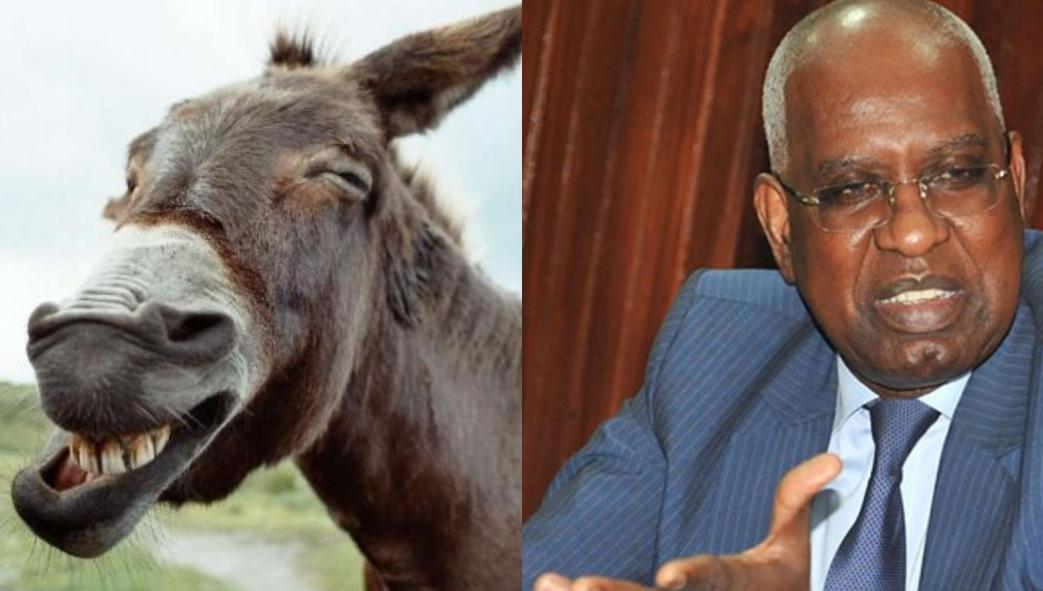 Assemblée : Me Malick Sall traite les députés de l'opposition d'ânes