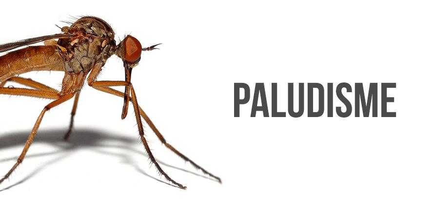 Lutte contre le Paludisme: Les Etats-Unis appuient le Sénégal à hauteur de 3 milliards F Cfa !
