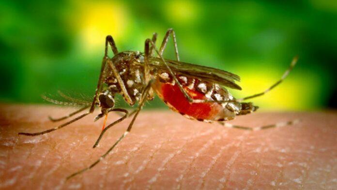 Chine : Après 70 ans de lutte, le paludisme éradiqué du pays !